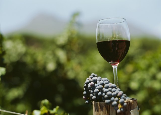 close-up of a glass of red wine with grapes in a vineyard