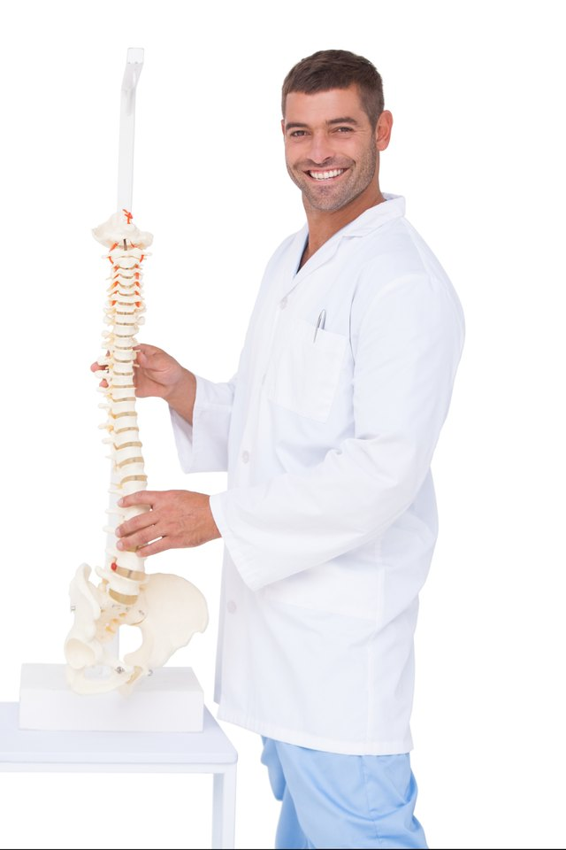 Chiropractor showing spine model to camera