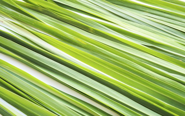 An Allergy to Lemongrass