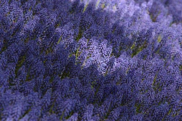 Field if wildflowers