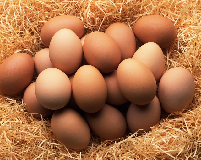 Free Range Egg Nutrition