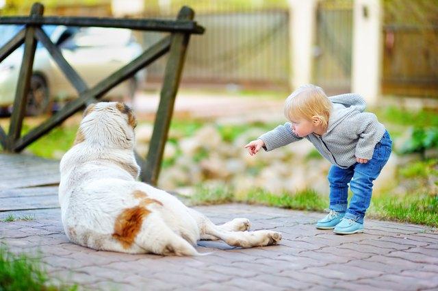 Toddler boy playing with dog
