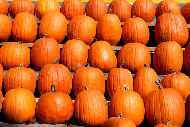 Row of pumkins