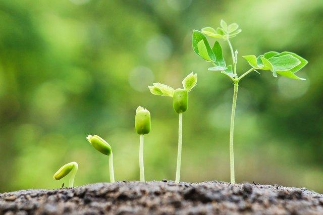 growing baby plants