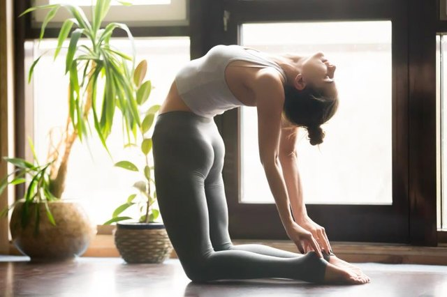 Young attractive woman practicing yoga, sitting in Ustrasana exercise, Camel pose, working out, wearing sportswear, grey pants, bra, indoor full length, home interior background, near potted plants