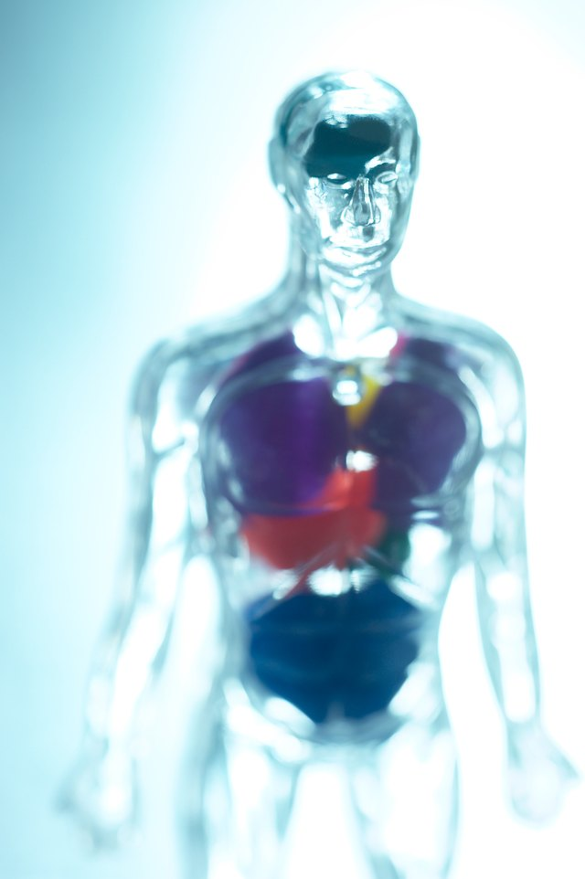 Ayurvedic Treatment for a Fatty Liver