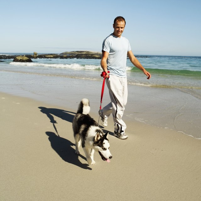 young man walking with his dog on the beach