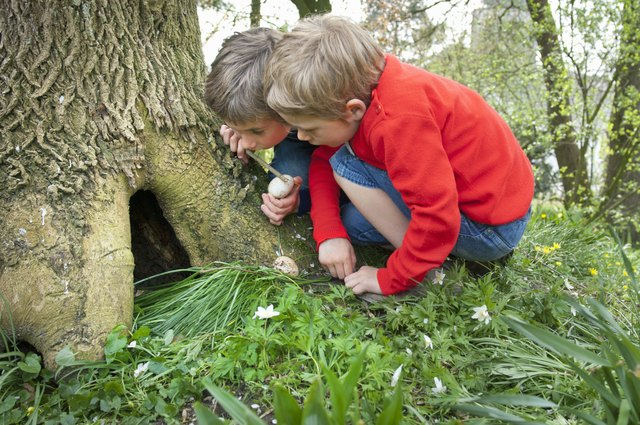 Boys finding a treasure in the hole of a tree