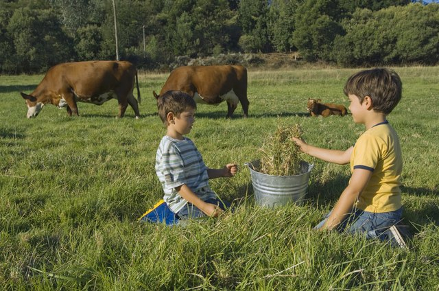 Boys playing with bucket by cows