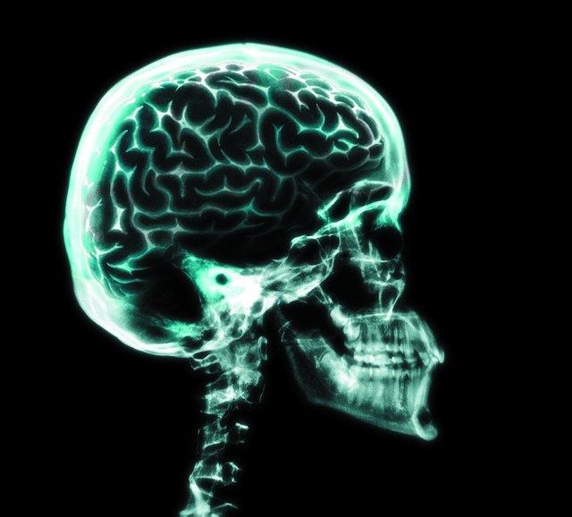 Parts of the Brain That Control Primitive Reflexes