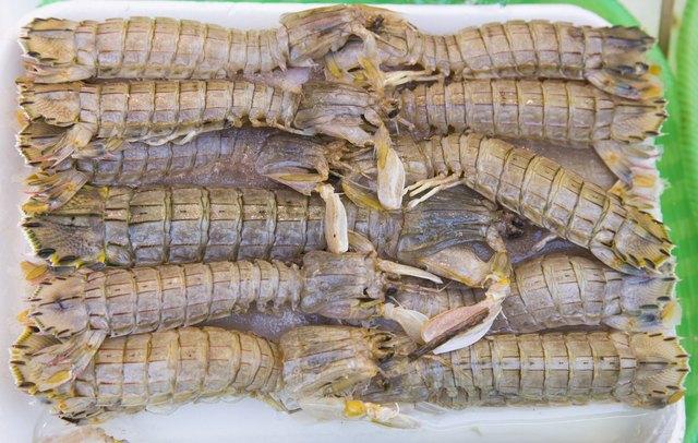very fresh crustaceans called mantis shrimp
