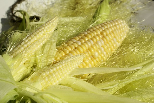 Corn Twins
