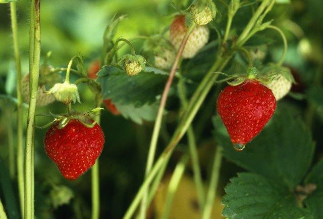 Waterdrop on strawberry