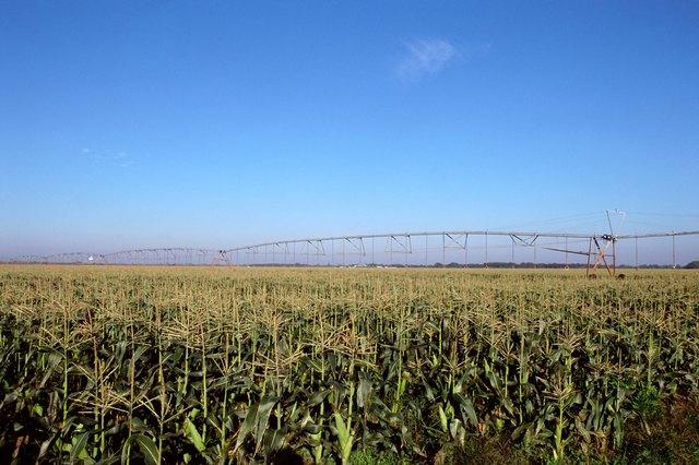 Corn field and horizon