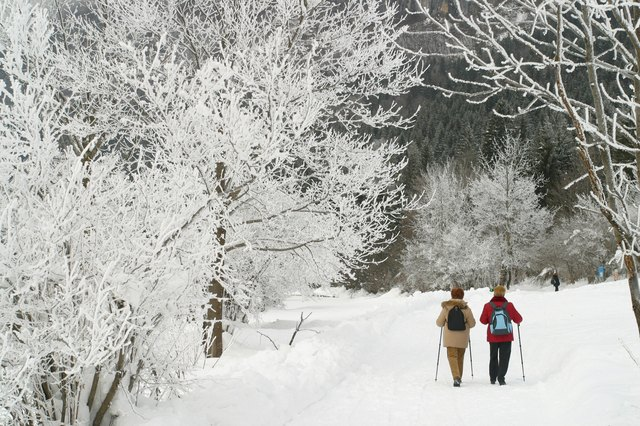 Two friends explore the land of frozen trees, Lake Bled, Slovenia.