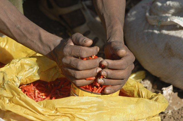Buying red hot Chili Peppers at a market in Ethiopia