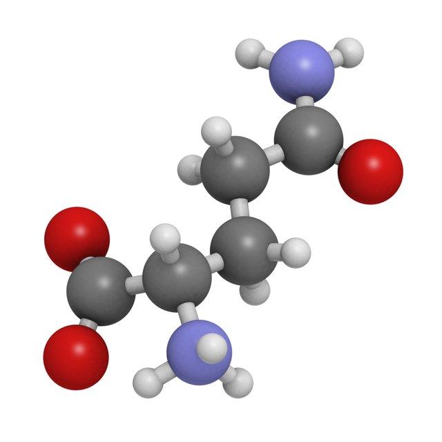 Glutamine (Gln, Q) amino acid, molecular model.