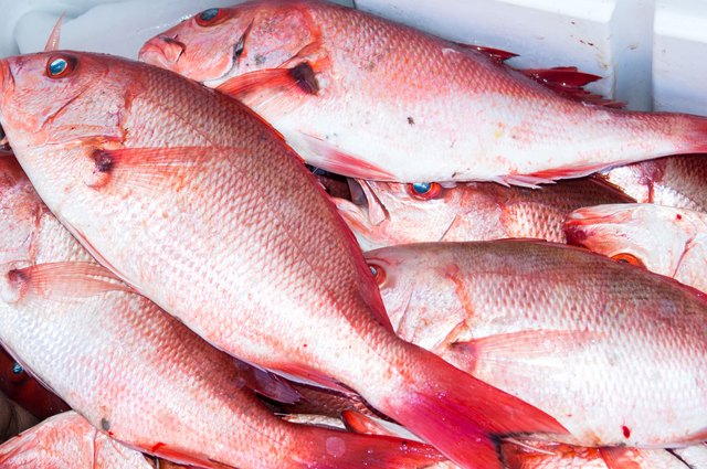 Red snapper in a freezer