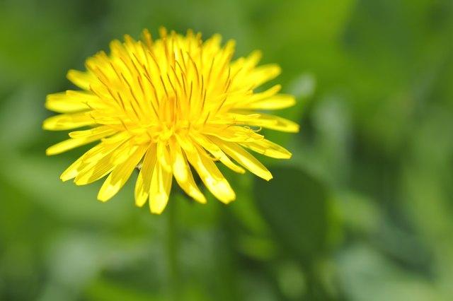 Herbs That Remove Ascites in the Abdomen