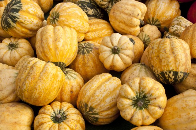 Yellow and Green Carnival Squash