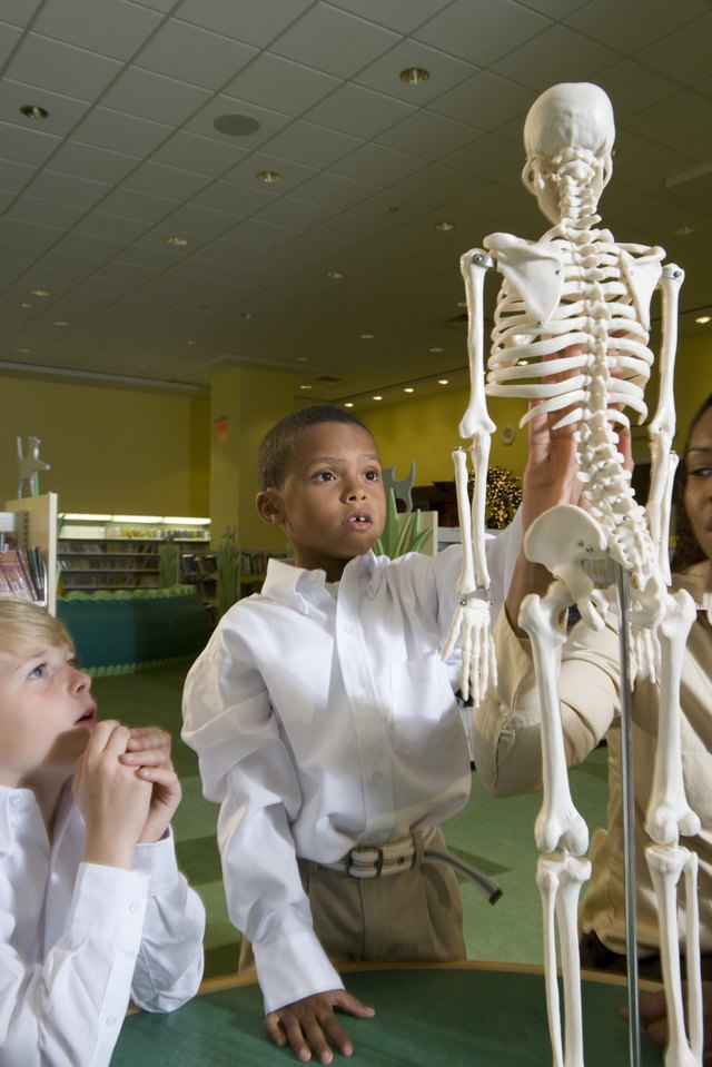 Teacher showing a model skeleton to schoolboys in the library