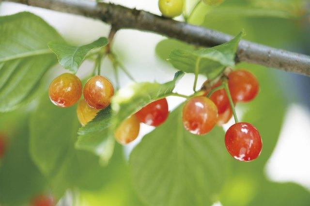 Pros & Cons of Cherry Juice