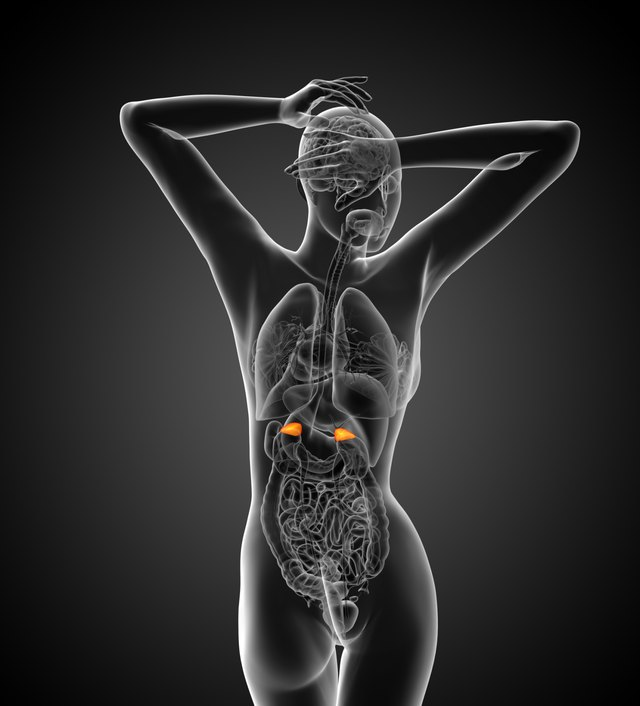 3d render medical illustration of the adrenal