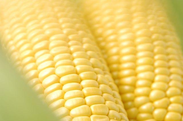 Fresh corn on the cob.