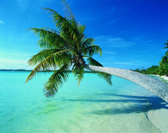 Palm tree leaning over water