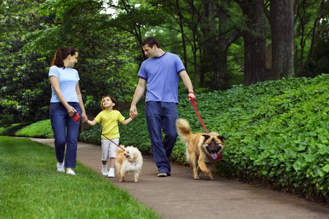 Family holding hands and walking dogs