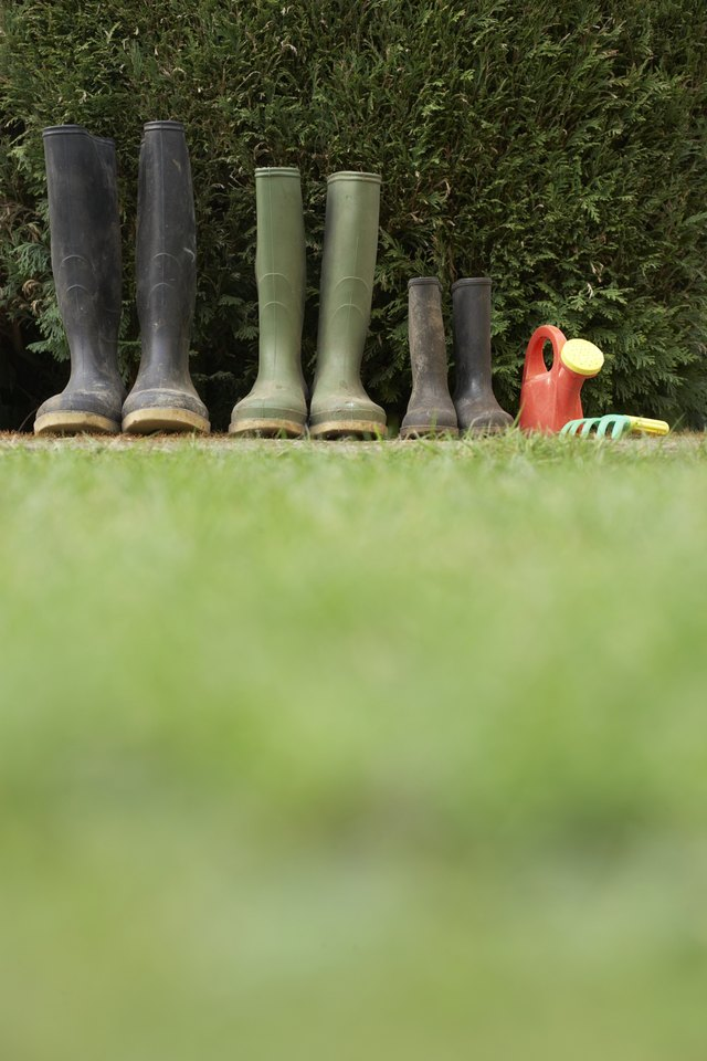 Row of galoshes by hedge, ground view