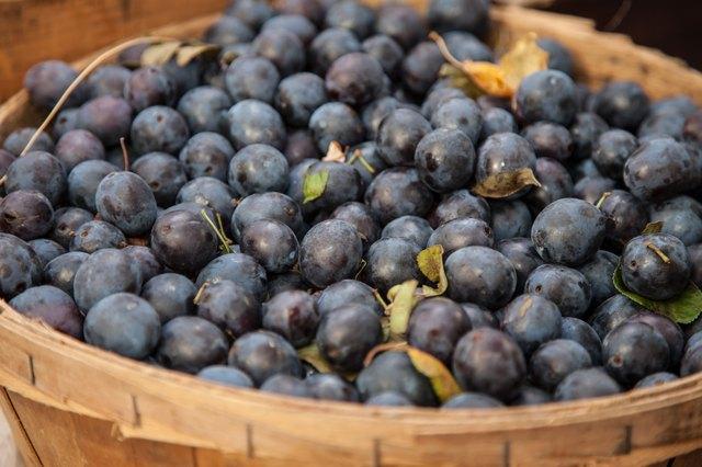 Basket full of blueberries