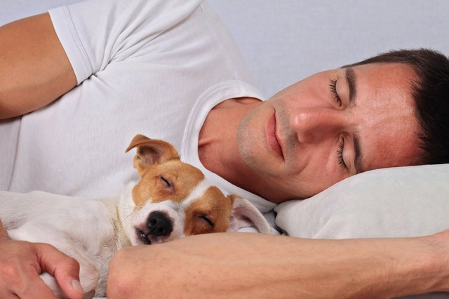 Man and dog sleeping together. Pet Allergies concept
