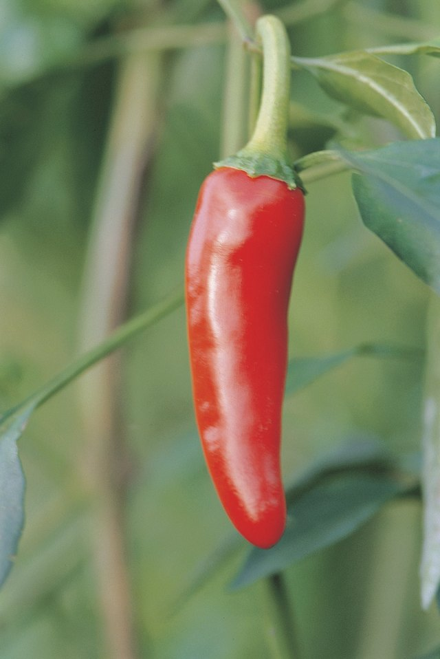 Cayenne Pepper And Anxiety Livestrong Com
