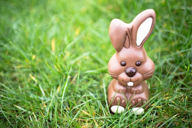chocolate rabbit in grass