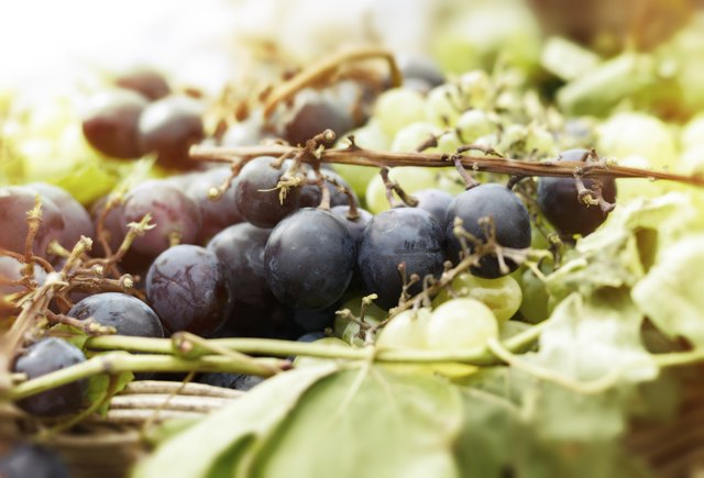 Bunches of grapes in wicker basket II