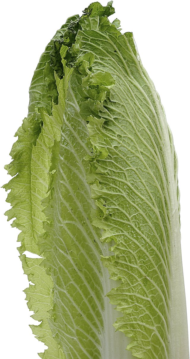 What Green Lettuce Is The Most Nutritious Livestrong Com