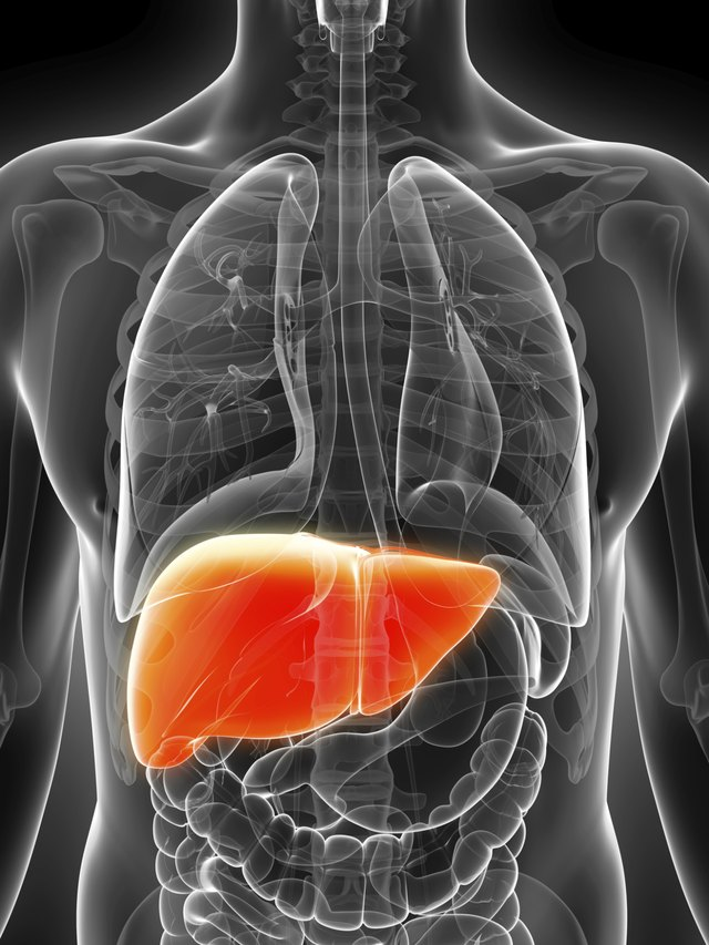 What Can You Eat During a Liver Cleanse?