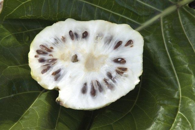 Noni fruit, Hilo, Hawaii, Big Island, USA