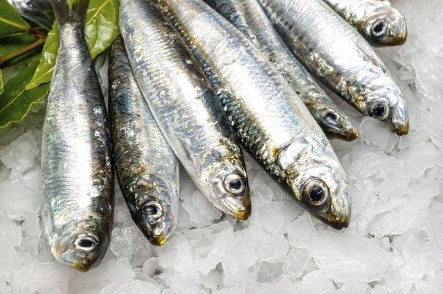 Fresh Sardines on ice.
