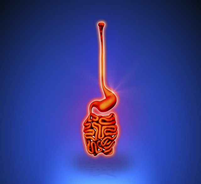 Stomach - Internal organs blue background