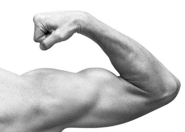 Strong male arm shows biceps. Close-up black and white studio photo isolated on white