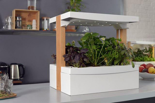 Fresh Square self watering, self sunning, indoor plant box sits on table