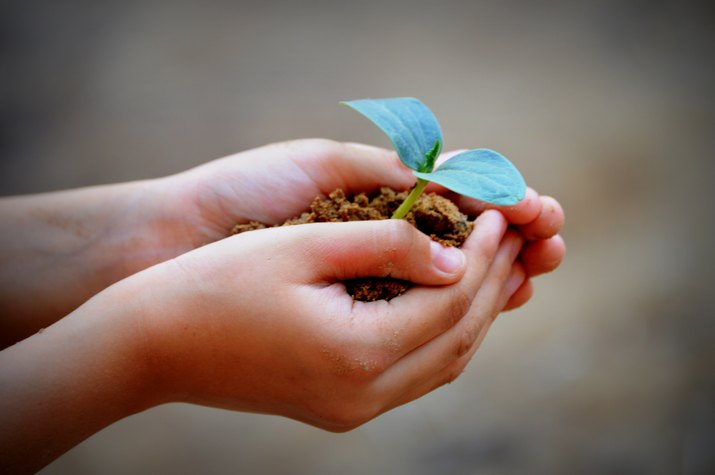 saving trees and and plants with your hands and planting more.