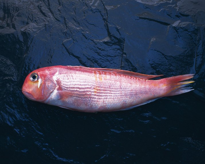 Tilefish on black surface, side view