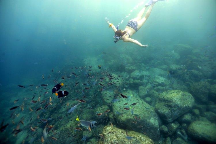 Jess Barron snorkeling