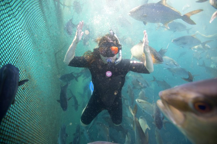 Kim in the underwater pens with the Baja Kanpachi