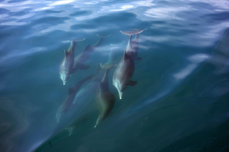 Dolphins we saw